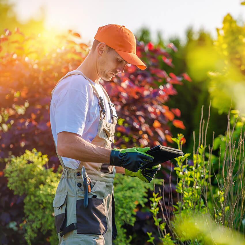 usługi ogrodnicze Brwinów